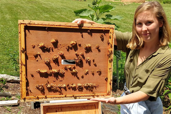 Appalachian State University students help bees in decline