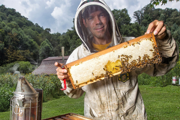 Saving the bees—Appalachian student and faculty researchers seek to recover declining honeybee population