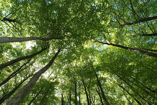 Appalachian Carbon Research Group awarded UNC System funding to develop accounting guidelines for forest carbon offset projects